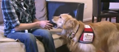 cachorro farejador de glicemia diabetes