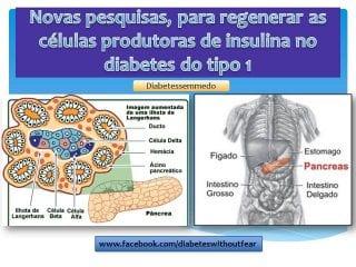 diabetes sem medo regeneração células beta diabetes