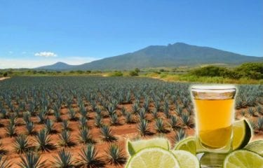 tequila agavin diabetes