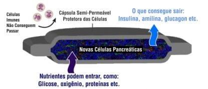 encaptra vc-01 diabetes