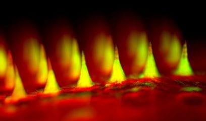 foto - adesivo de insulina - zoom nas microagulhas
